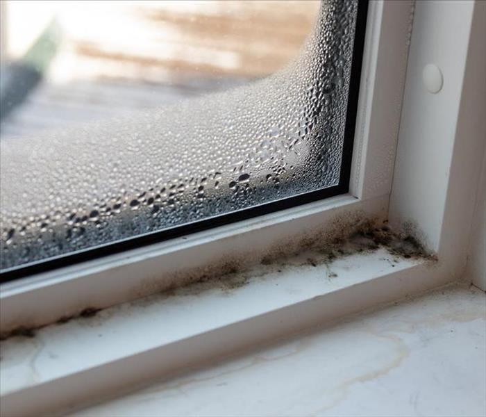 molding growing on window sill