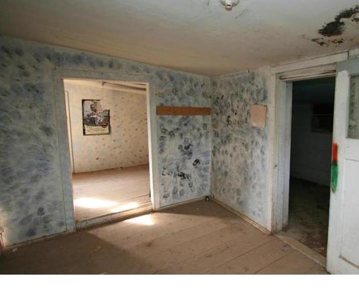 Mold Remediation Mold? What mold problem? Things that you don't know about mold that can harm your home