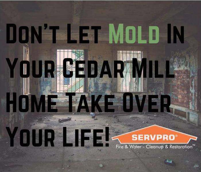 Mold Remediation Don't Mess With Mold In Cedar Mill