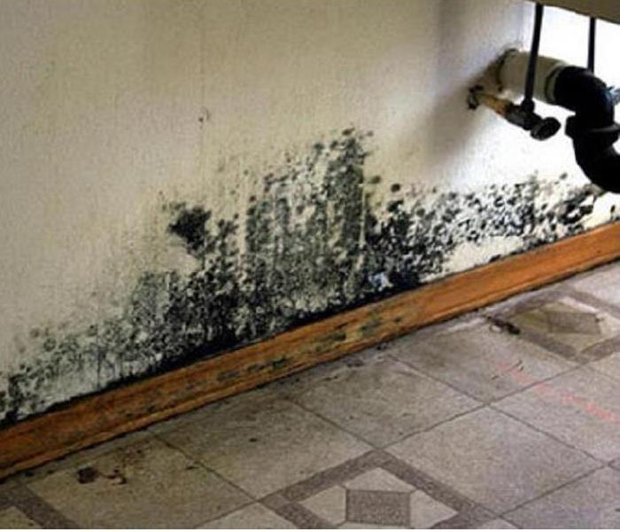 Mold Remediation What Is Black