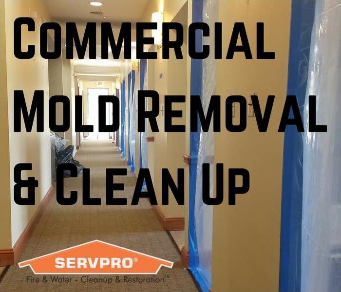 Mold Remediation Commercial Mold Removal In The Cedar Mill Area