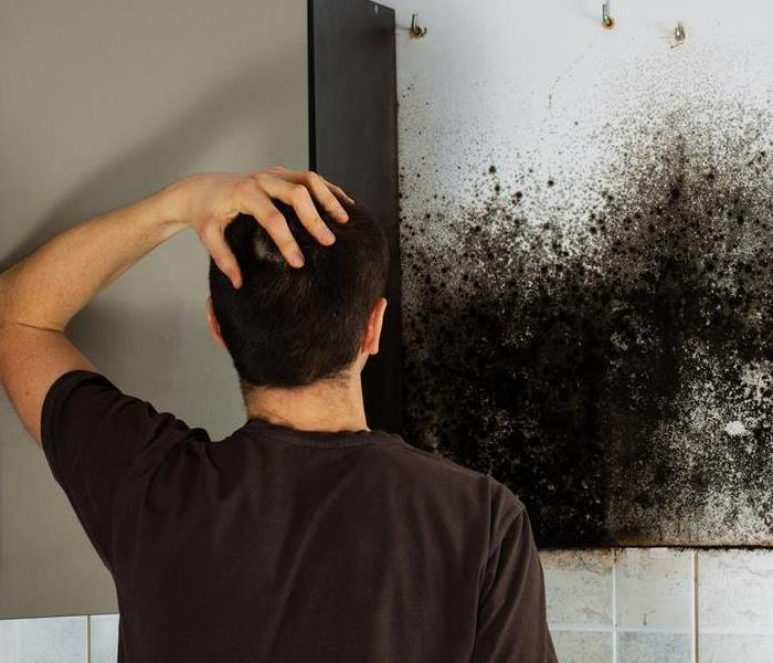 Mold Remediation Tips to Mitigating Mold in Cedar Mill!